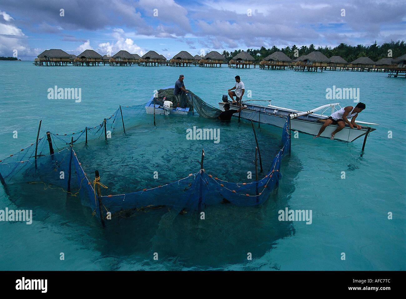 Fish trap pearl beach resort bora bora french polynesia for Bora bora fish