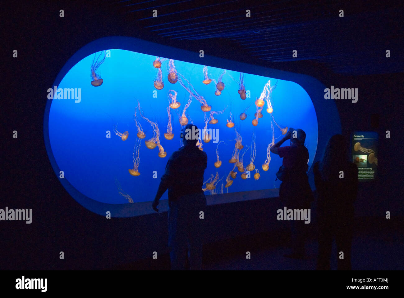Monterey Bay Aquarium Jellyfish Exhibit