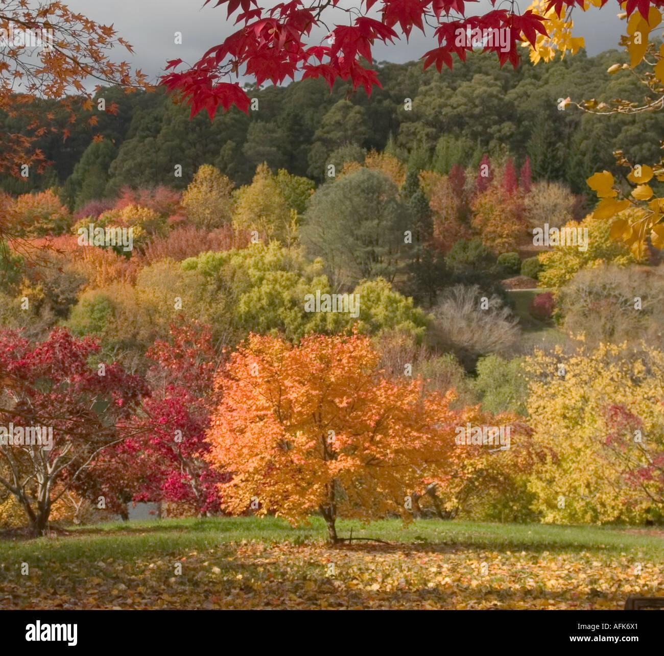 Autumn View Mount Lofty Gardens Adelaide South Australia Stock