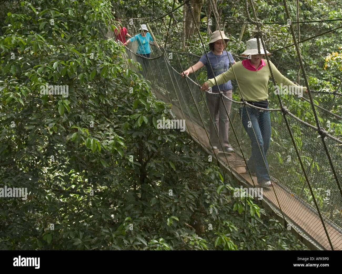 MALAYSIA SABAH PORING HOT SPRING TOURISTS ON TREE TOP CANOPY WALKWAY : tree top canopy - memphite.com