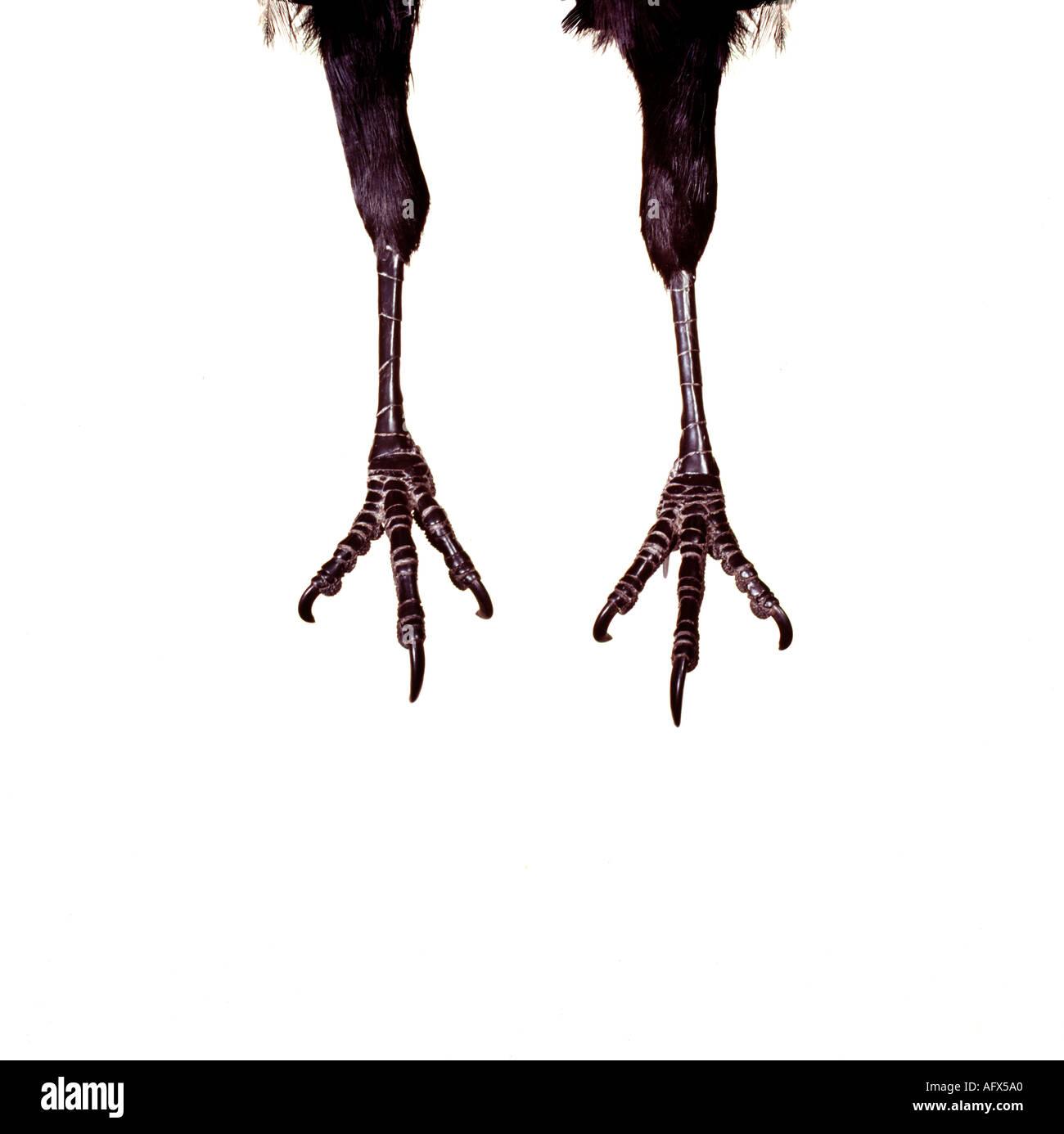 crows foot