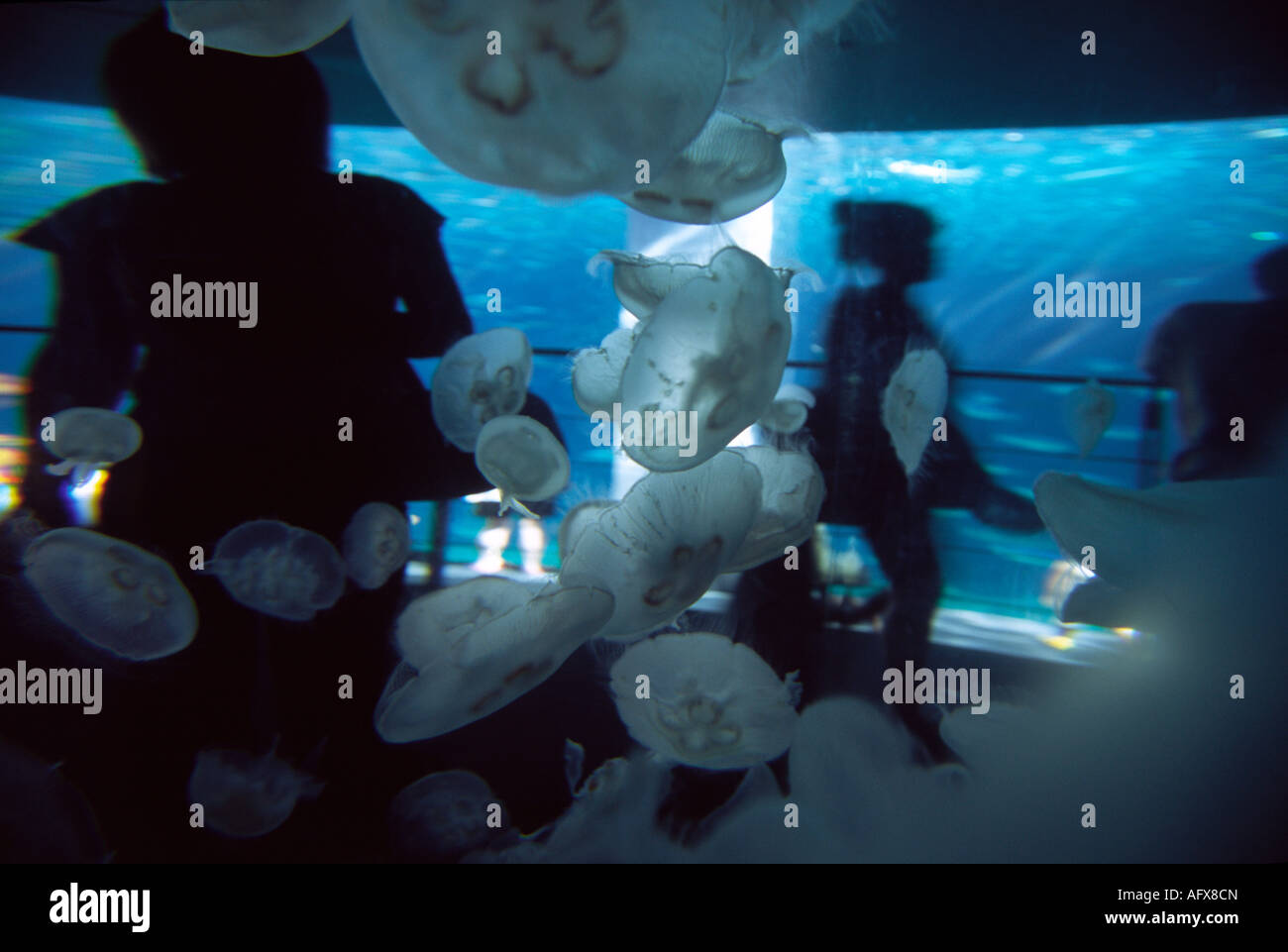 Fish tank japan - Stock Photo Tourists Seen Through A Jelly Fish Tank At Aquamarine Aquarium In Fukushima Japan