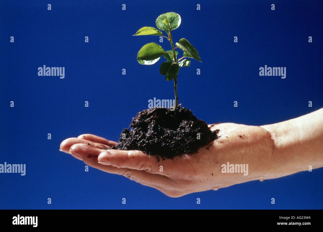 Environment environment protection hand holding soil with environment environment protection hand holding soil with seeding nature plant planting garden gardening symbol seed biocorpaavc