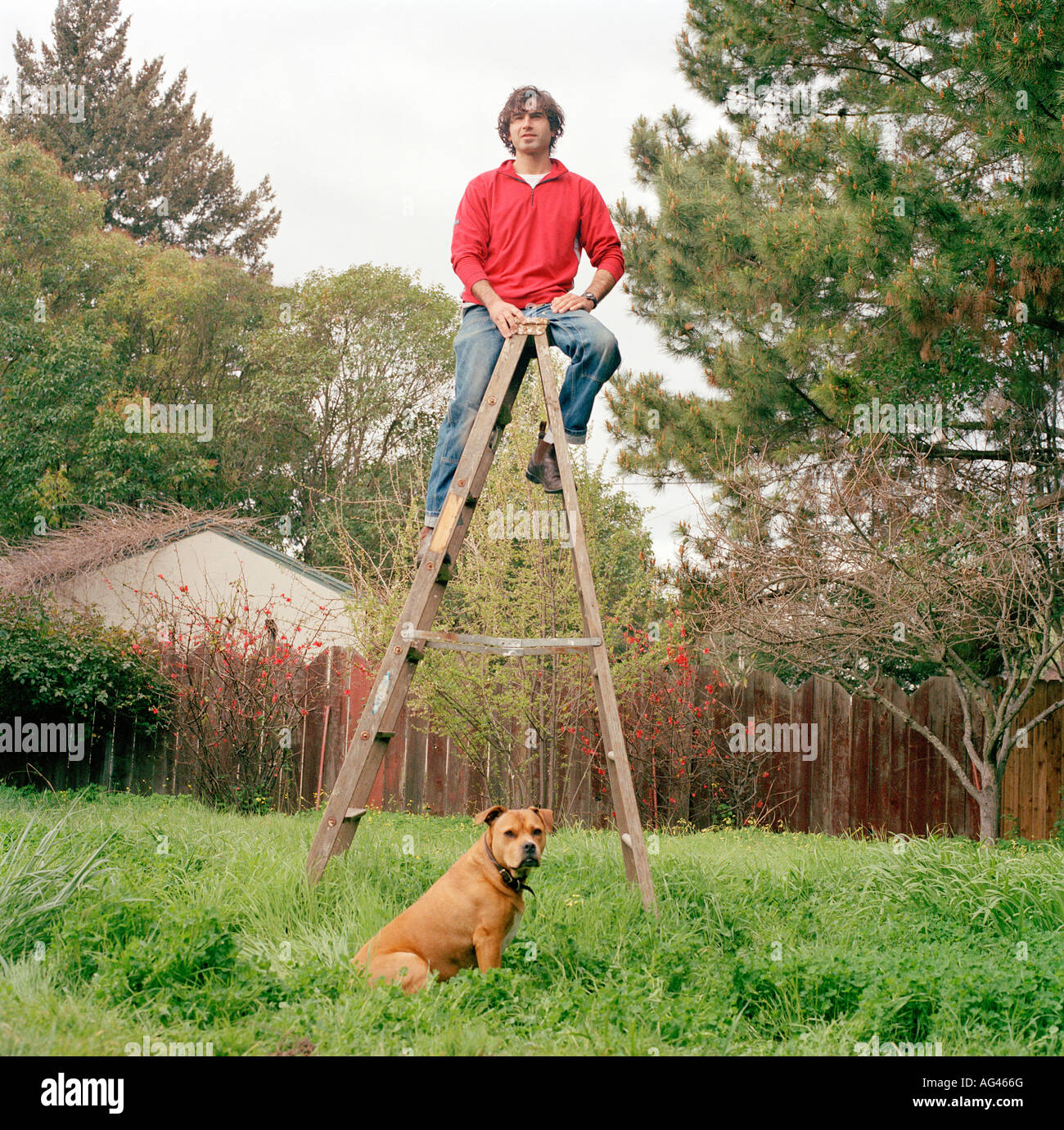 man standing on a ladder in his backyard with his dog sitting on