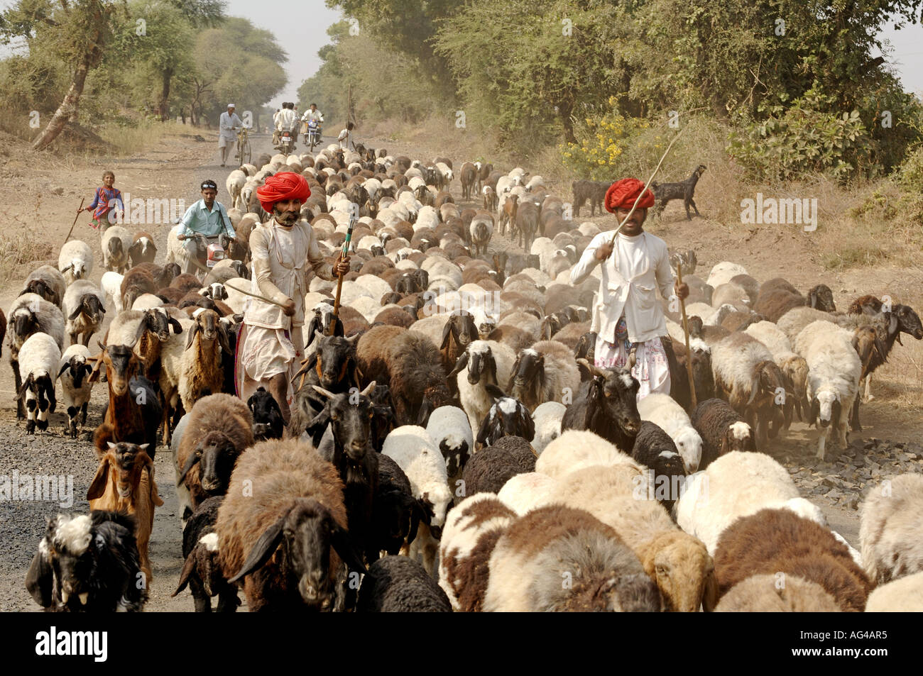 sheep and goat breeds of india pdf