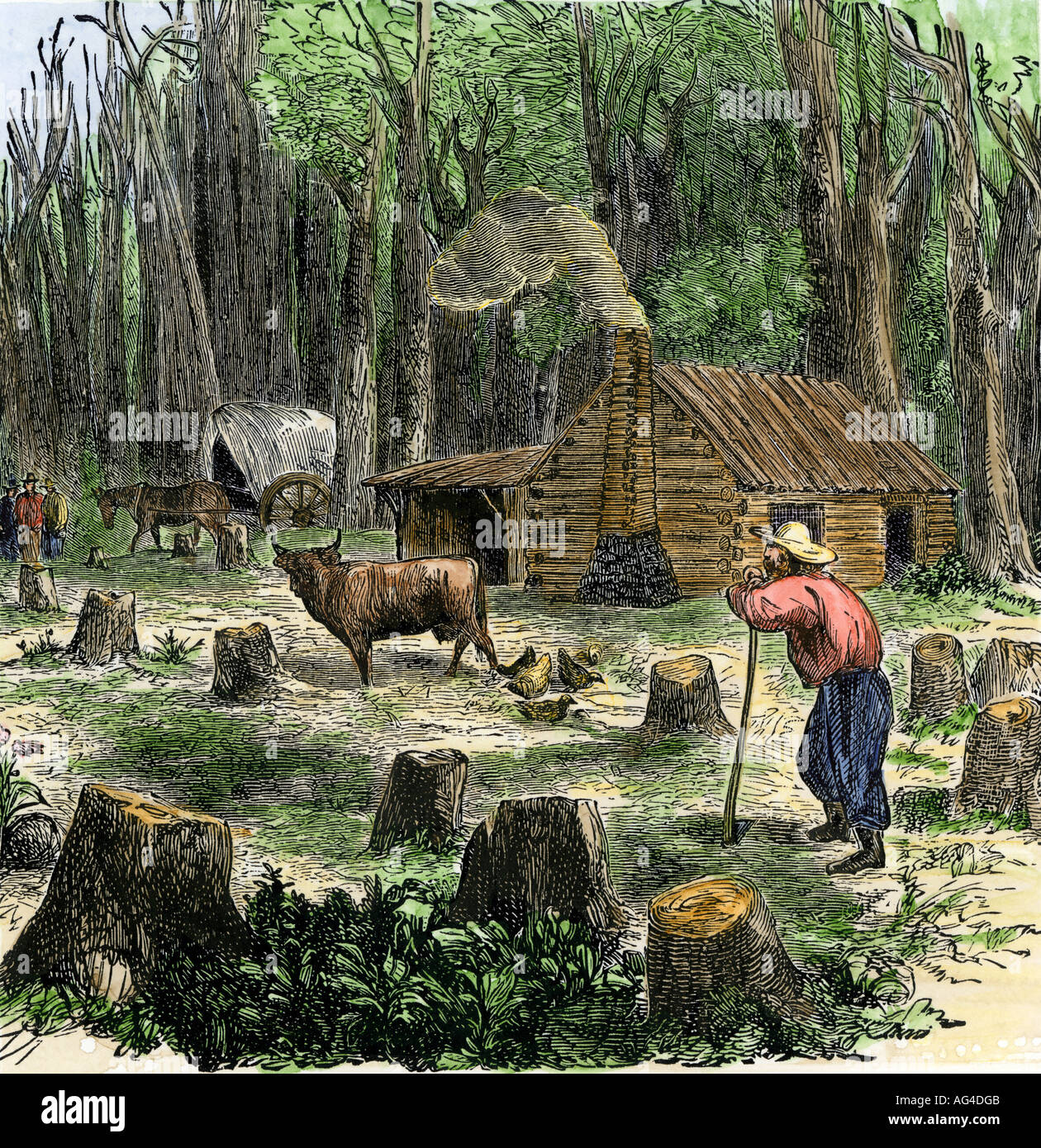 Marvelous photograph of Pioneer Clearing Trees From Land Around His Log Cabin Stock Photo  with #877F44 color and 1260x1390 pixels