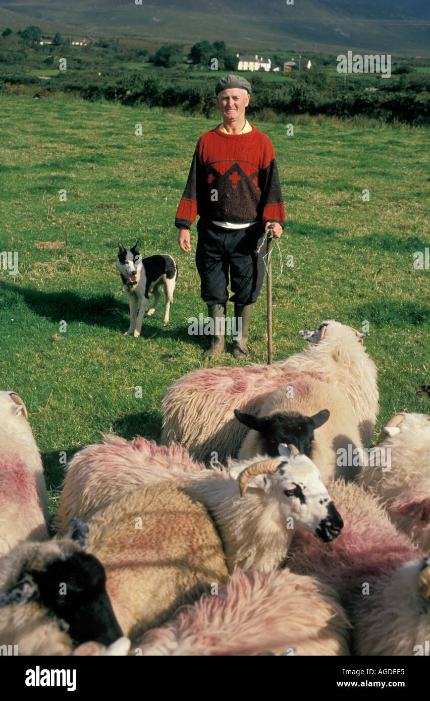 Irish Sheep Shepherd | www.imgkid.com - The Image Kid Has It!