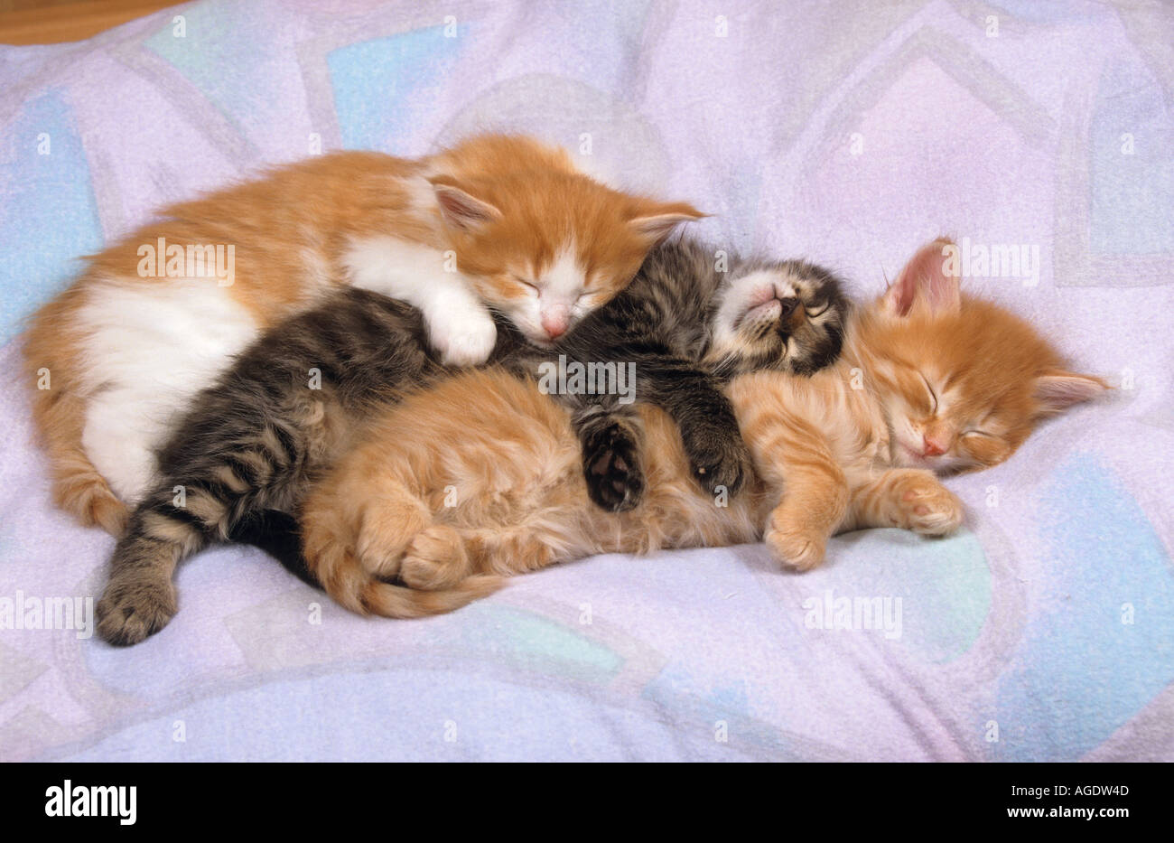 How Much Sleep Is Normal For Kittens? - Petcha