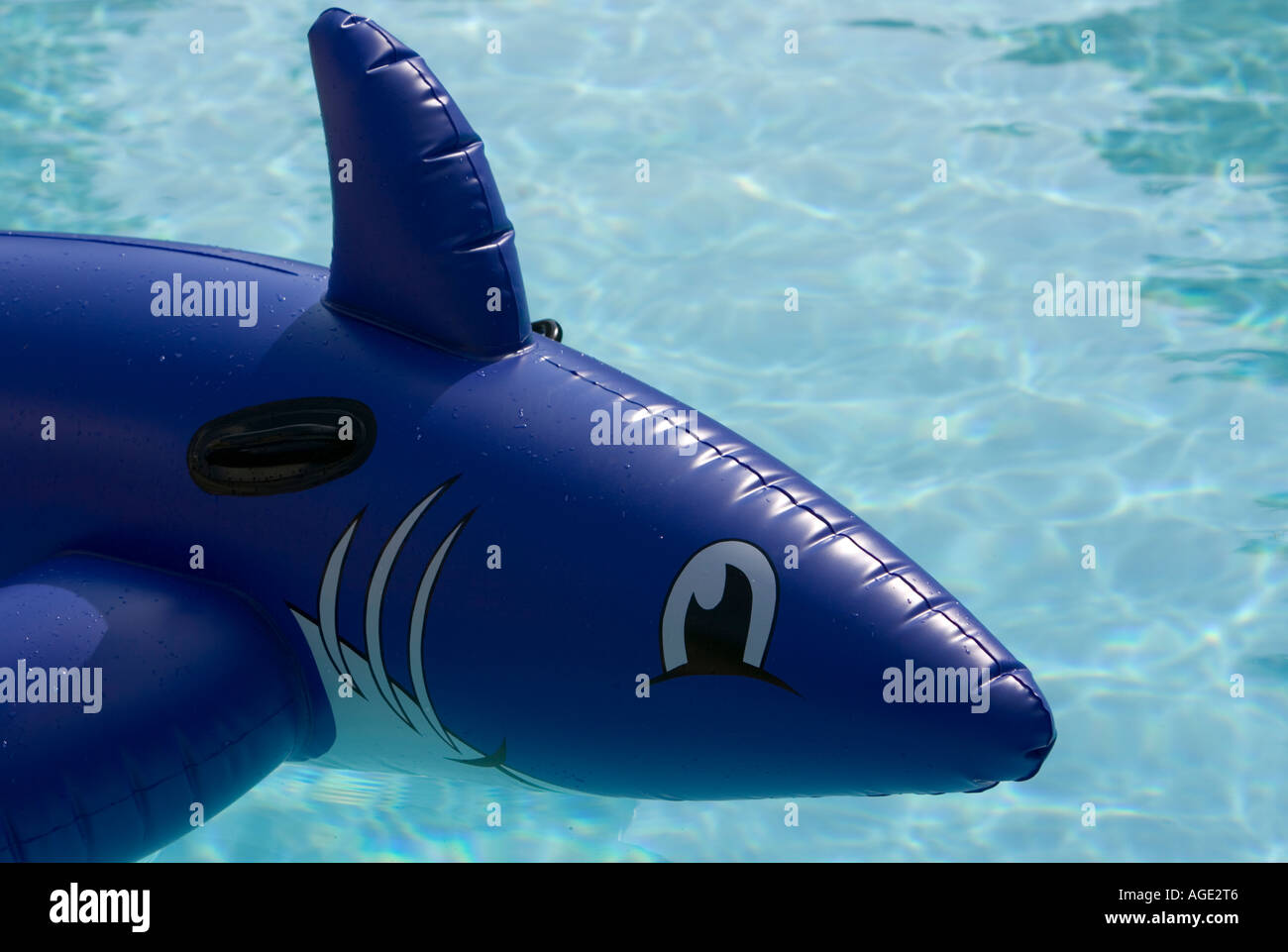 inflatable shark in a backyard pool stock photo royalty free