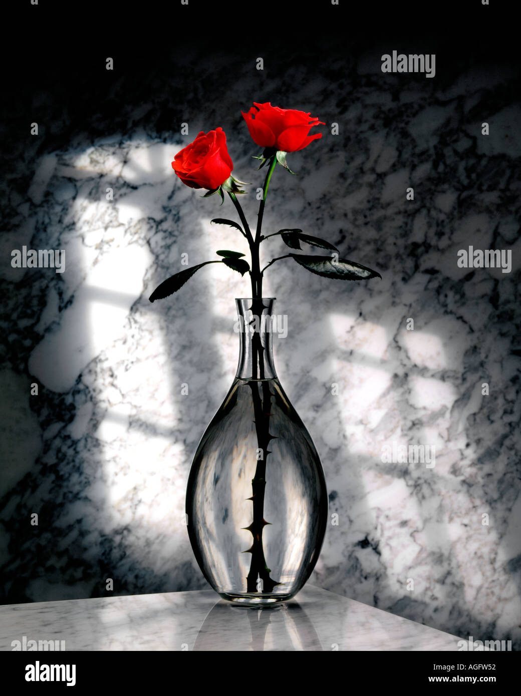 Two Red Roses In A Glass Vase On A Marble Background 2