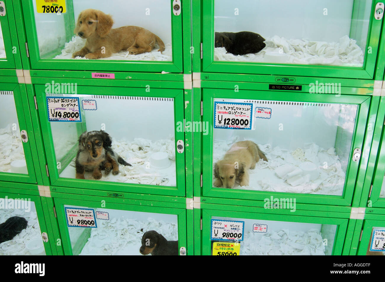 pet store with puppies for sale shinjuku tokyo japan