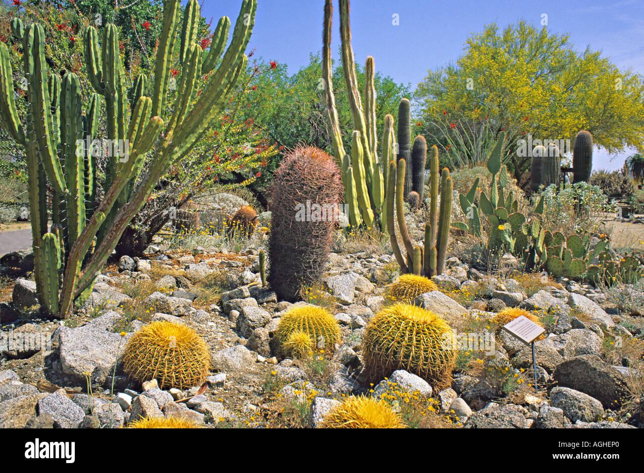 Stock Photo   Cactus Garden At The Living Desert In Palm Springs California