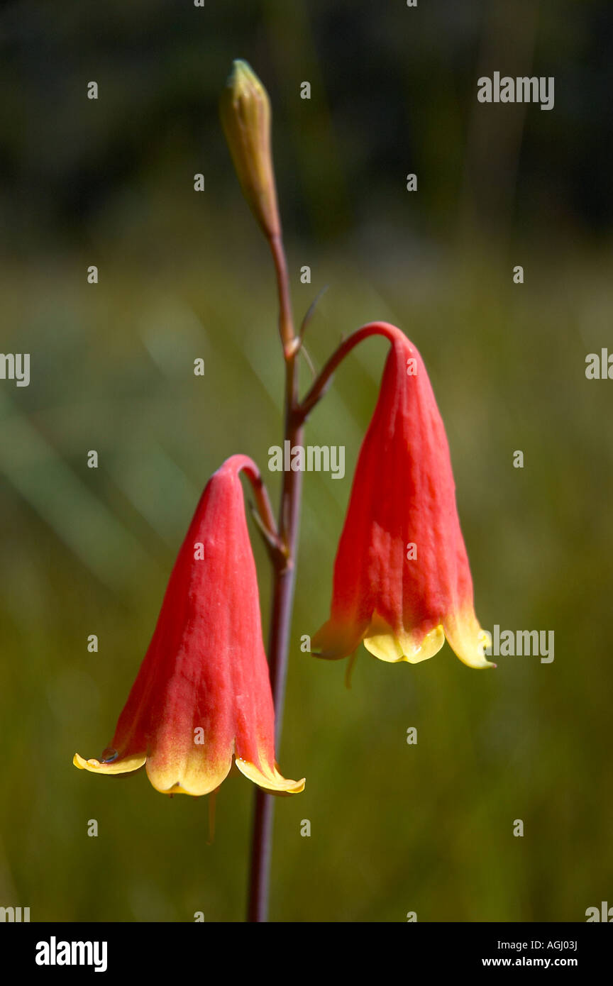christmas bell flowers stock photo royalty free image 14218661
