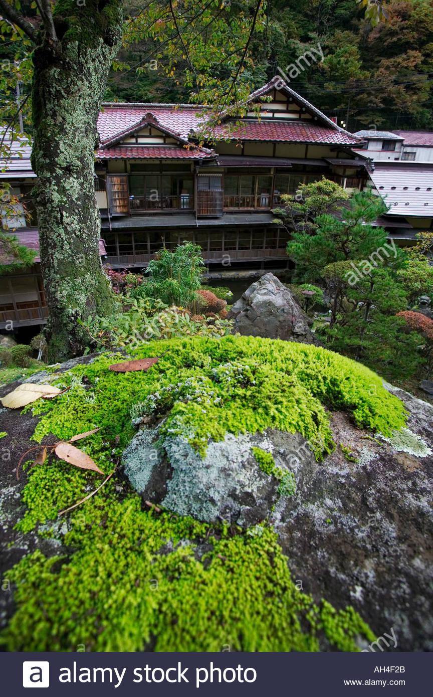 Bonsai: This Small Green Bonsai Tree Located In A Bonsai Garden Is ...