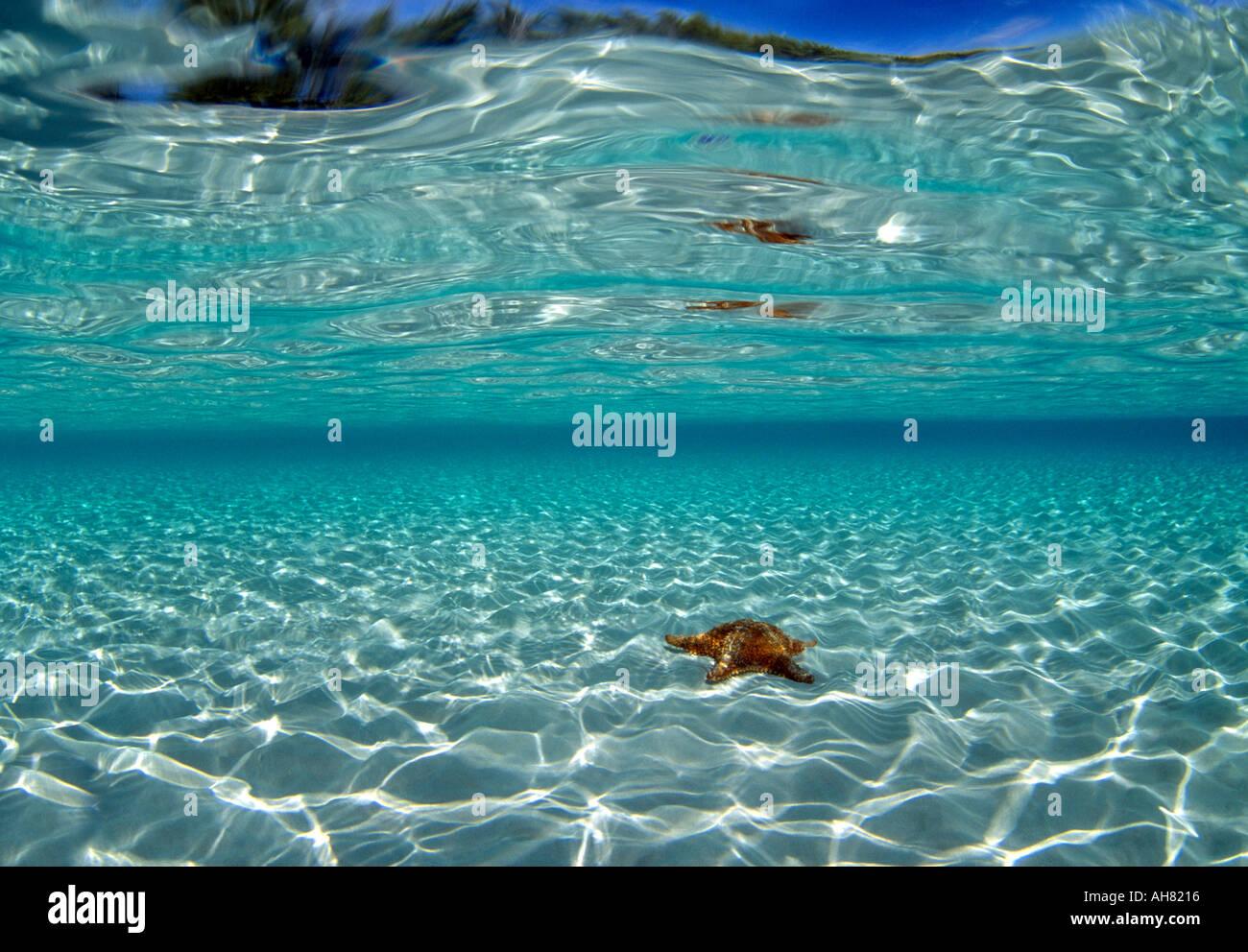 Bahamas Tour Grand Island
