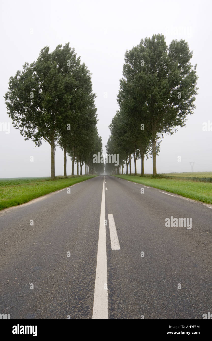 Long Straight Road with trees Stock Photo, Royalty Free Image ... for Straight Road With Trees  58cpg