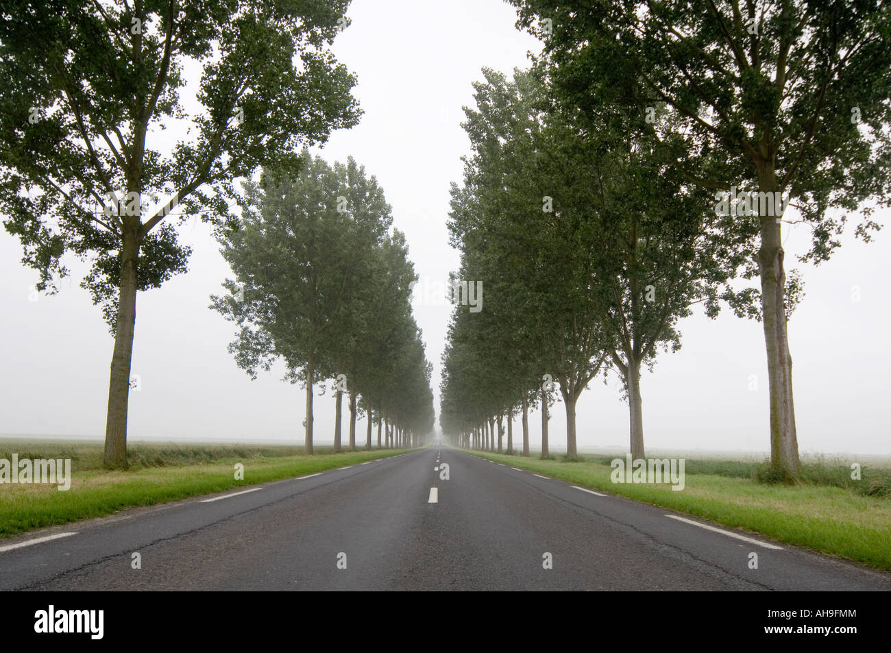 Long Straight Road with trees Stock Photo, Royalty Free Image ... for Straight Road With Trees  70ref