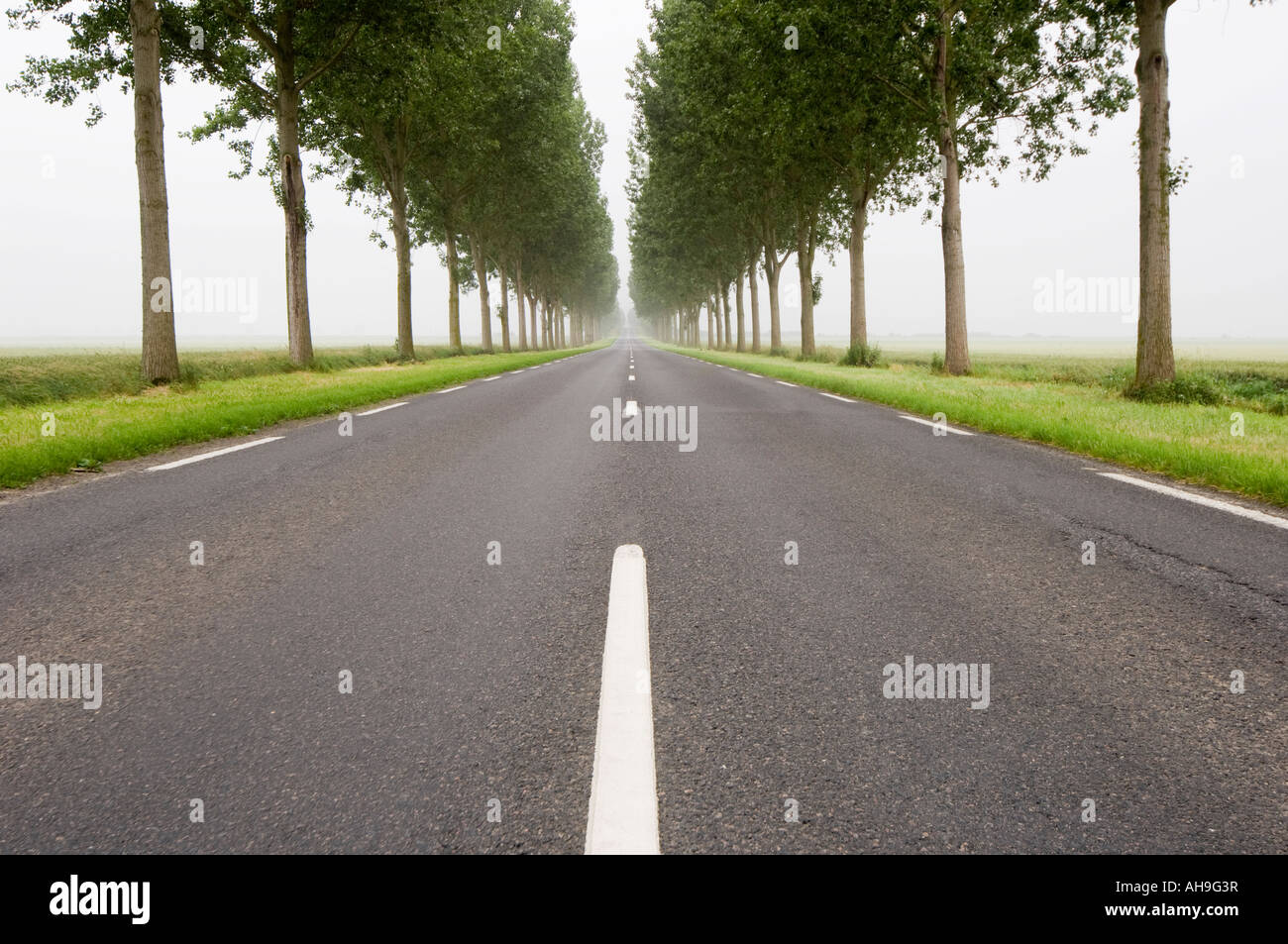 Long Straight Road with trees Stock Photo, Royalty Free Image ... for Straight Road With Trees  557yll