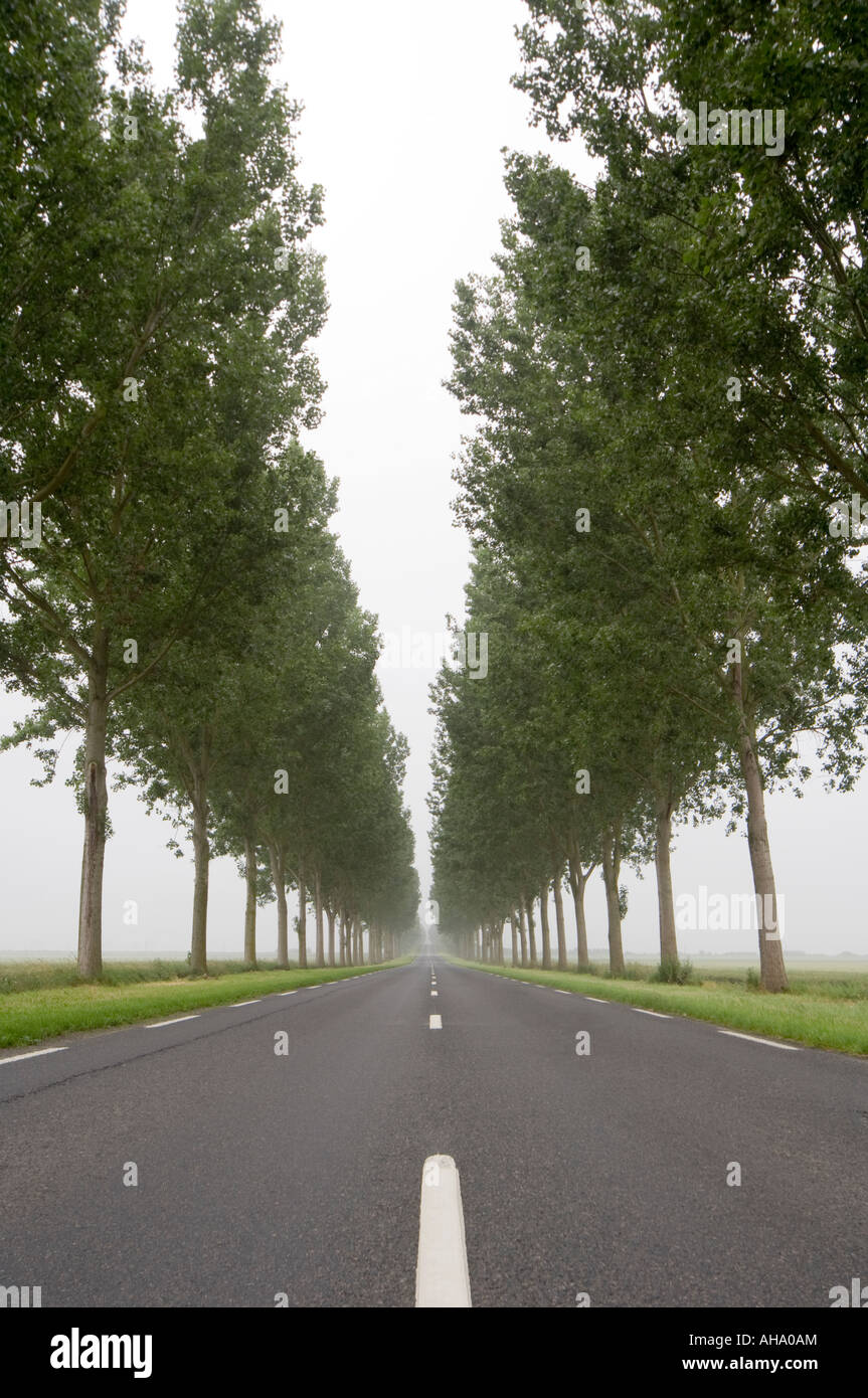 Long Straight Road with trees Stock Photo, Royalty Free Image ... for Straight Road With Trees  146hul