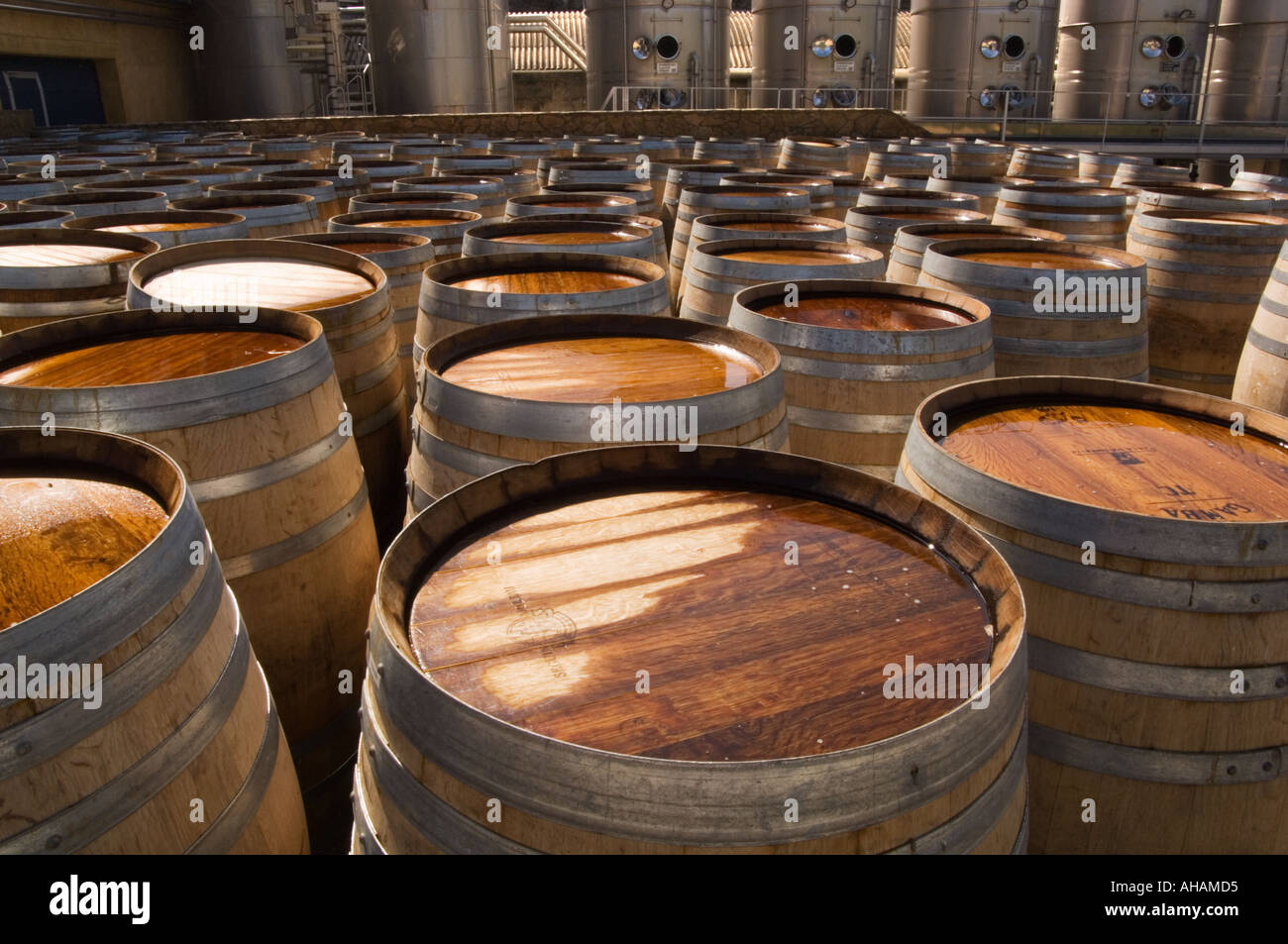 oak wine barrels. stock photo rows of oak wine barrels with stainless steel fermentation tanks in the background at regaliali estate winery sicily