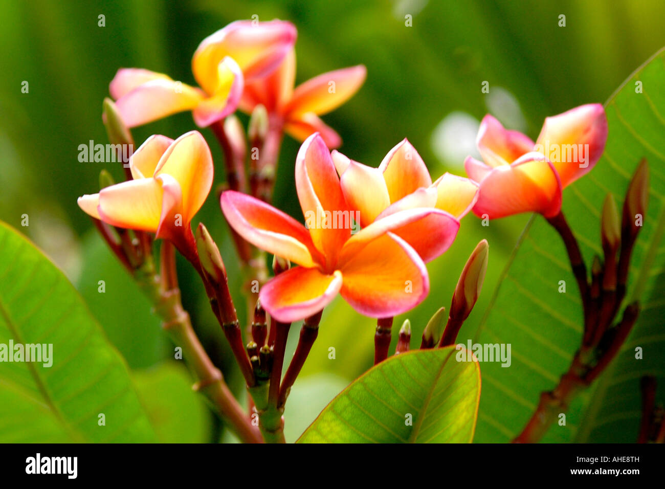 Vietnam Hanoi Flowers IV Close Up Of Exotic Yellow And Orange Flower On Tree