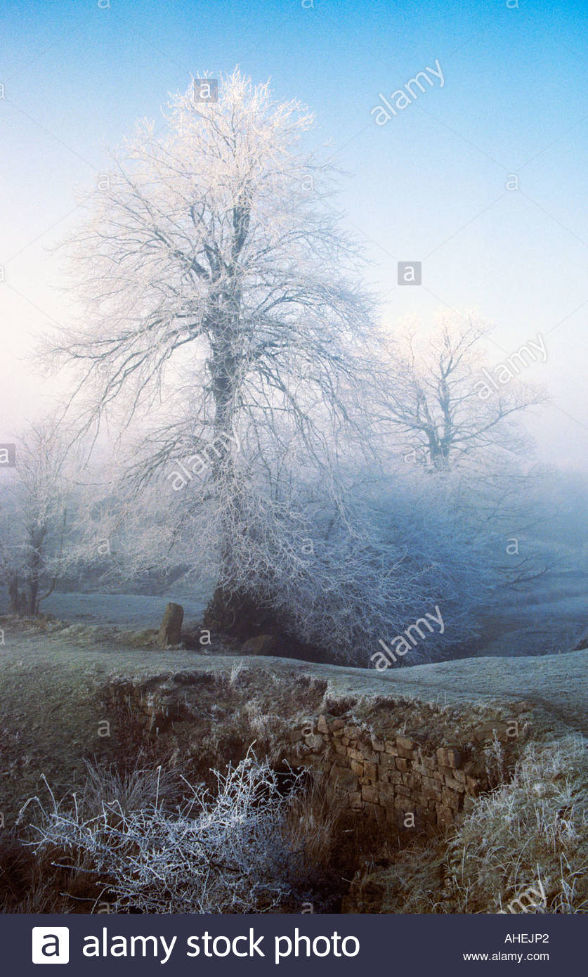 Hoar_frost_on_ash_tree_Gwent_Wales_UK-AH