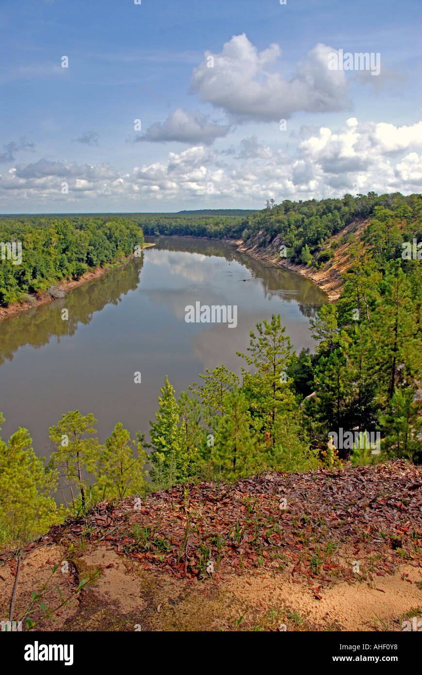Garden Of Eden Hiking Trail View From Alum Bluff Above Apalachicola Stock Photo Royalty Free