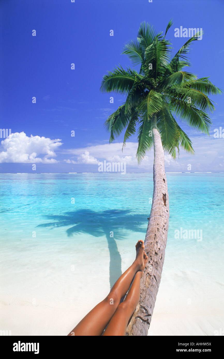 white sand beach palm tree. stock photo tan legs relaxing on palm tree over white sandy beach and pure clean aqua waters sand