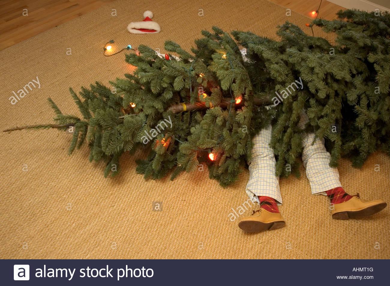 Man stuck underneath fallen Christmas tree Stock Photo, Royalty ...