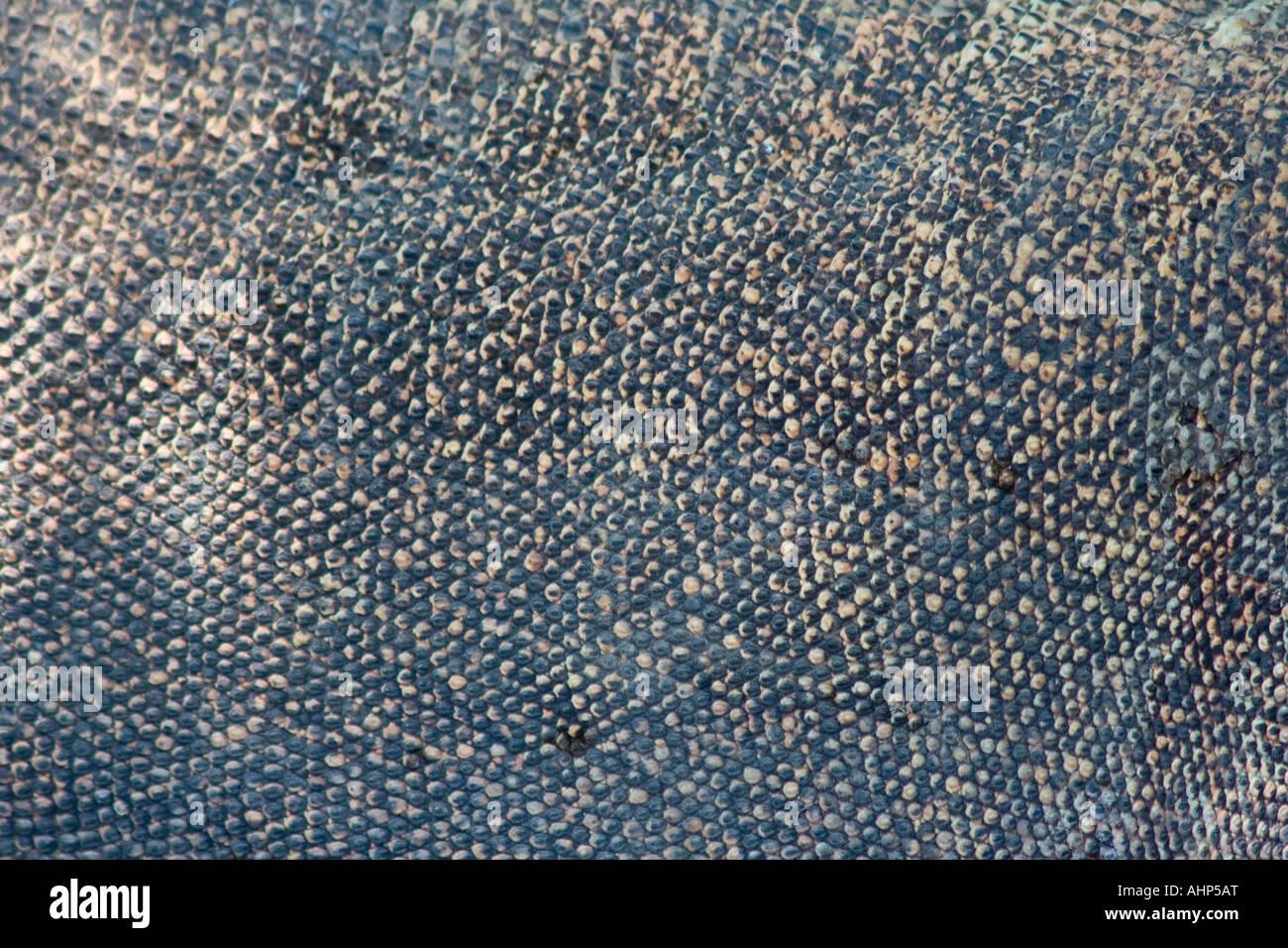 Dragon skin texture