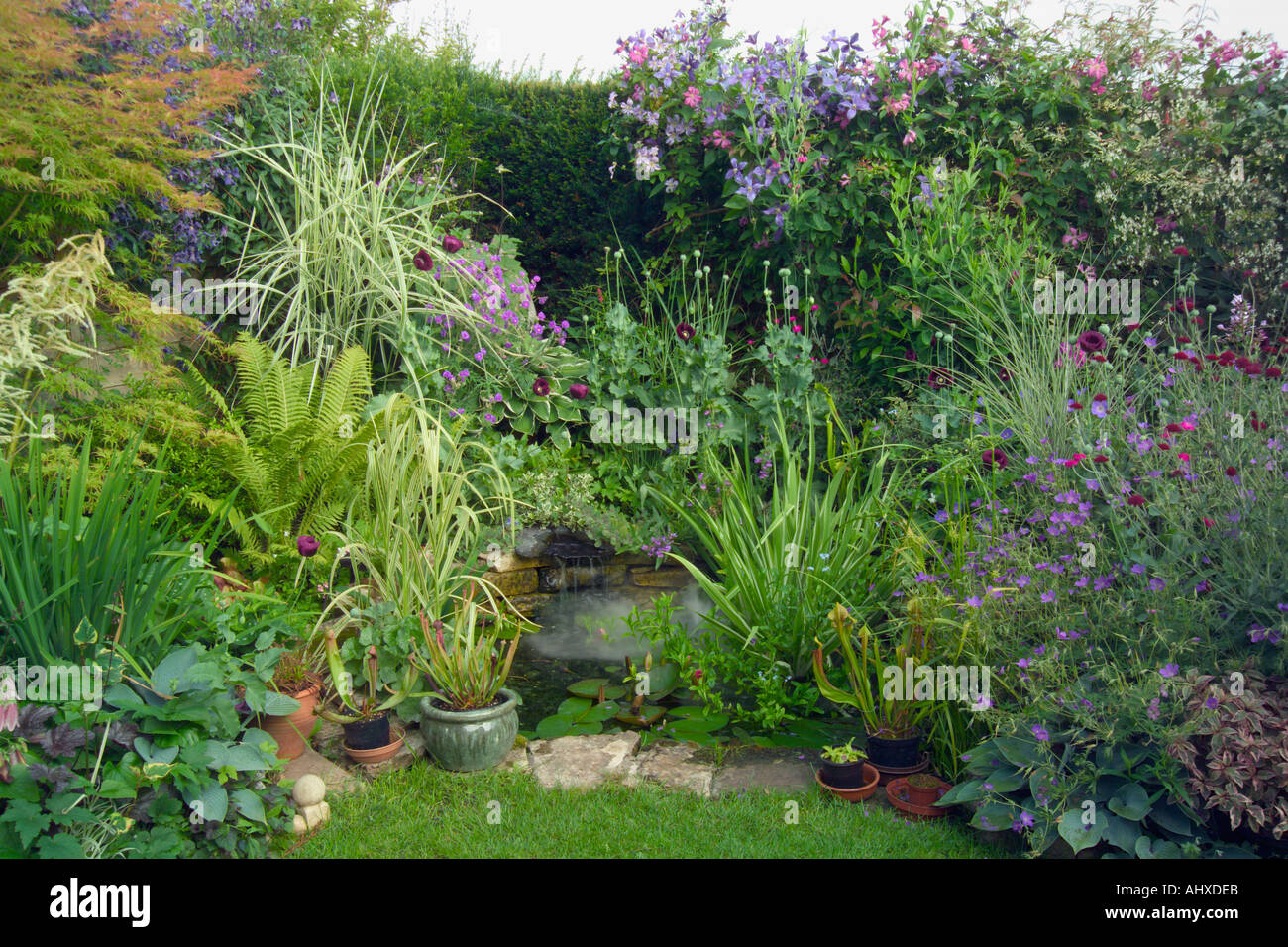 Small back garden well packed with plants showing height for Small back gardens