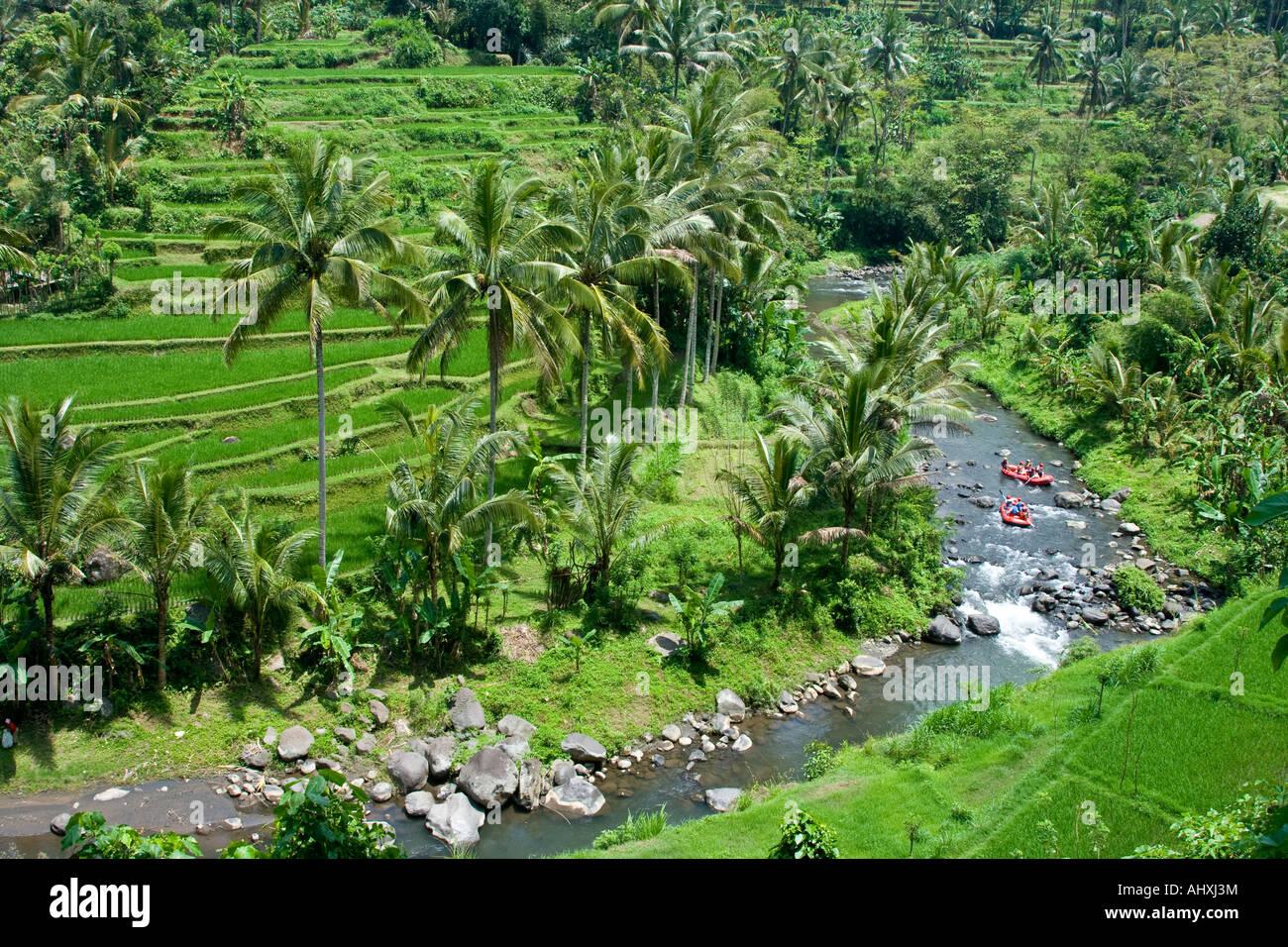 Rafting ayung river gorge rice terraces ubud bali for Terrace ubud bali