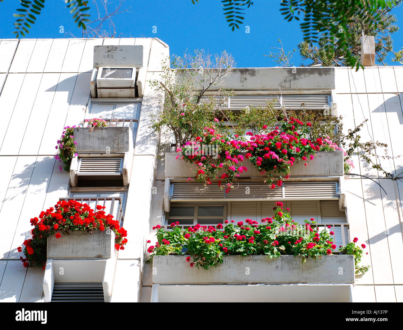 Israel Tel Aviv Modern Apartment Building With Pot Plants And