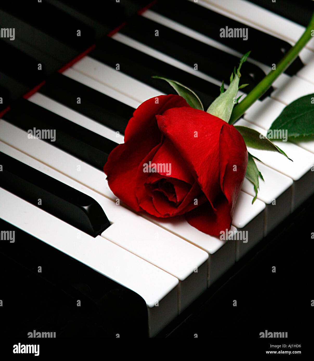 Flowers Music Flower Rose Keys White Piano Wallpapers For Tablets