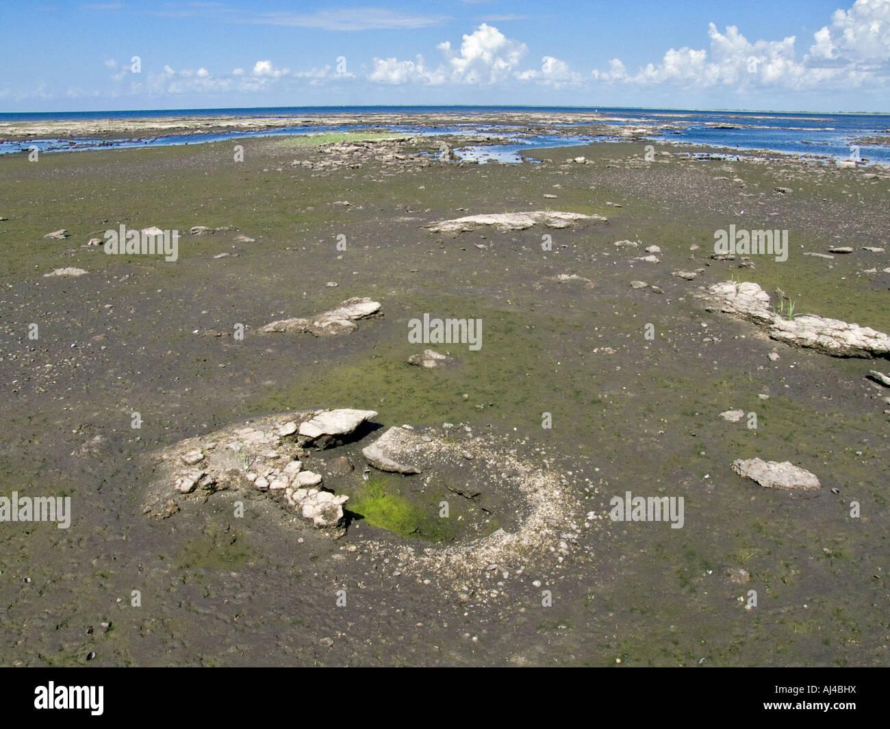 Lake okeechobee florida drought 2007 fl exposed lake for Florida lake fish