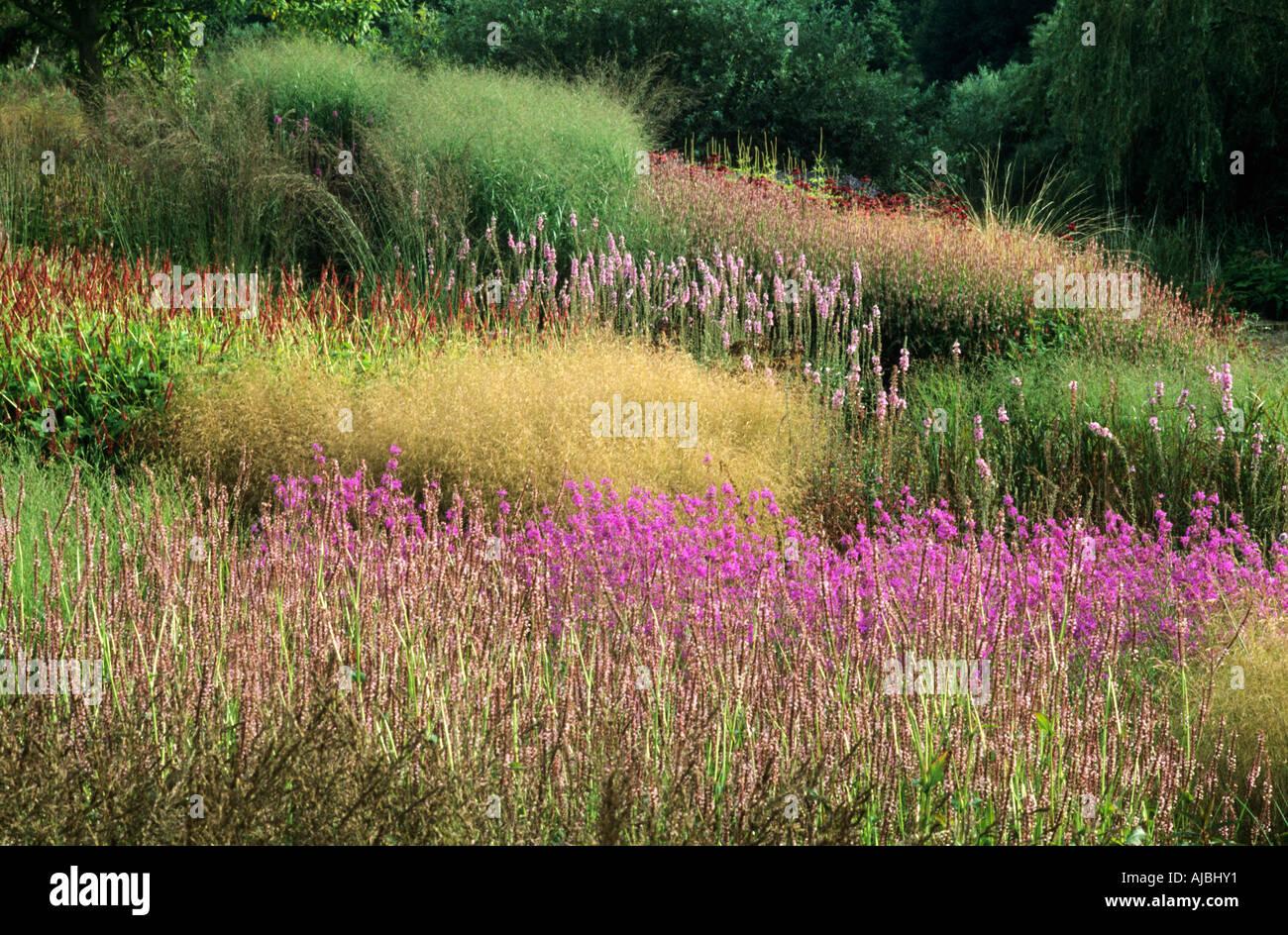 Pensthorpe millenium garden aug sept grasses lythrum piet for Planting the natural garden piet oudolf