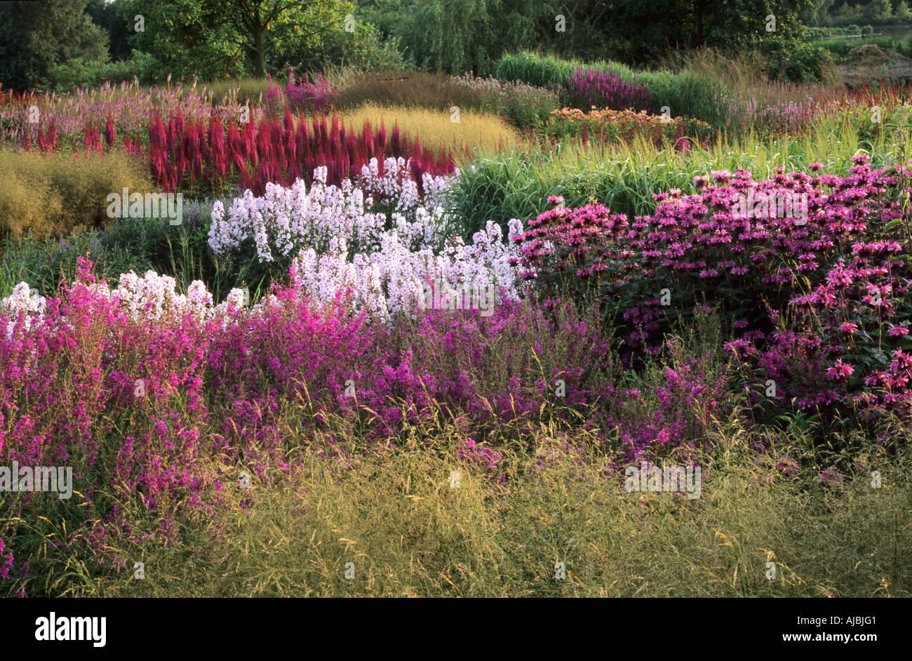 Pensthorpe millenium garden norfolk monarda astilbe for Piet oudolf pflanzen
