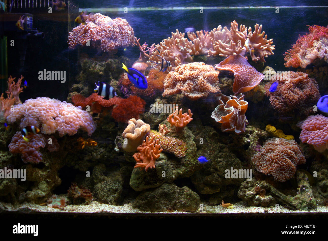 stock photo tropical fish in a fish tank bangkok thailand