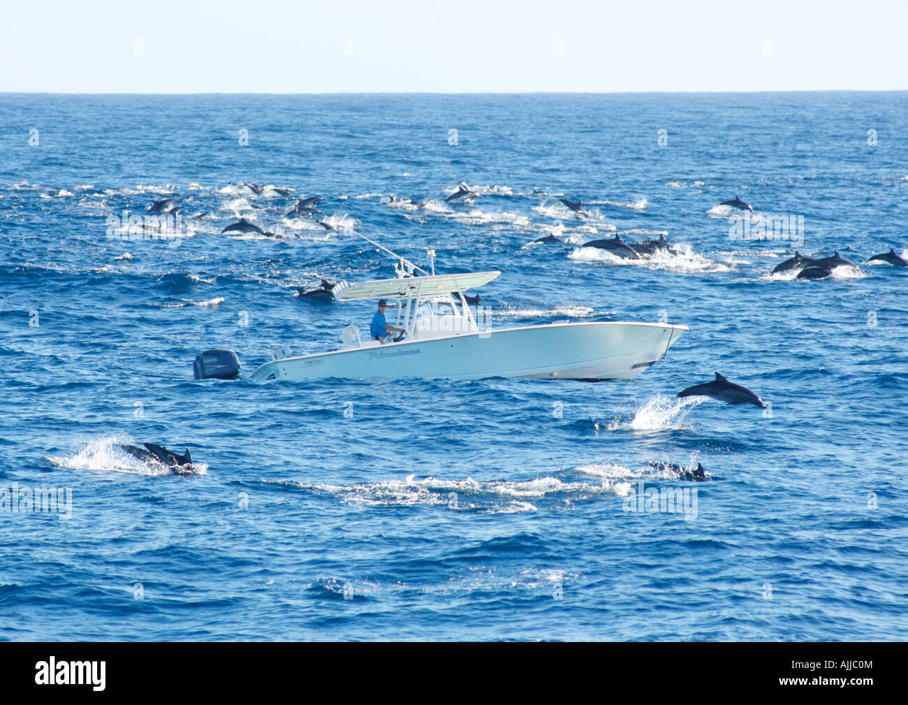 a huge pod of dolphins suround a 31 foot sport fishing boat with one man in it