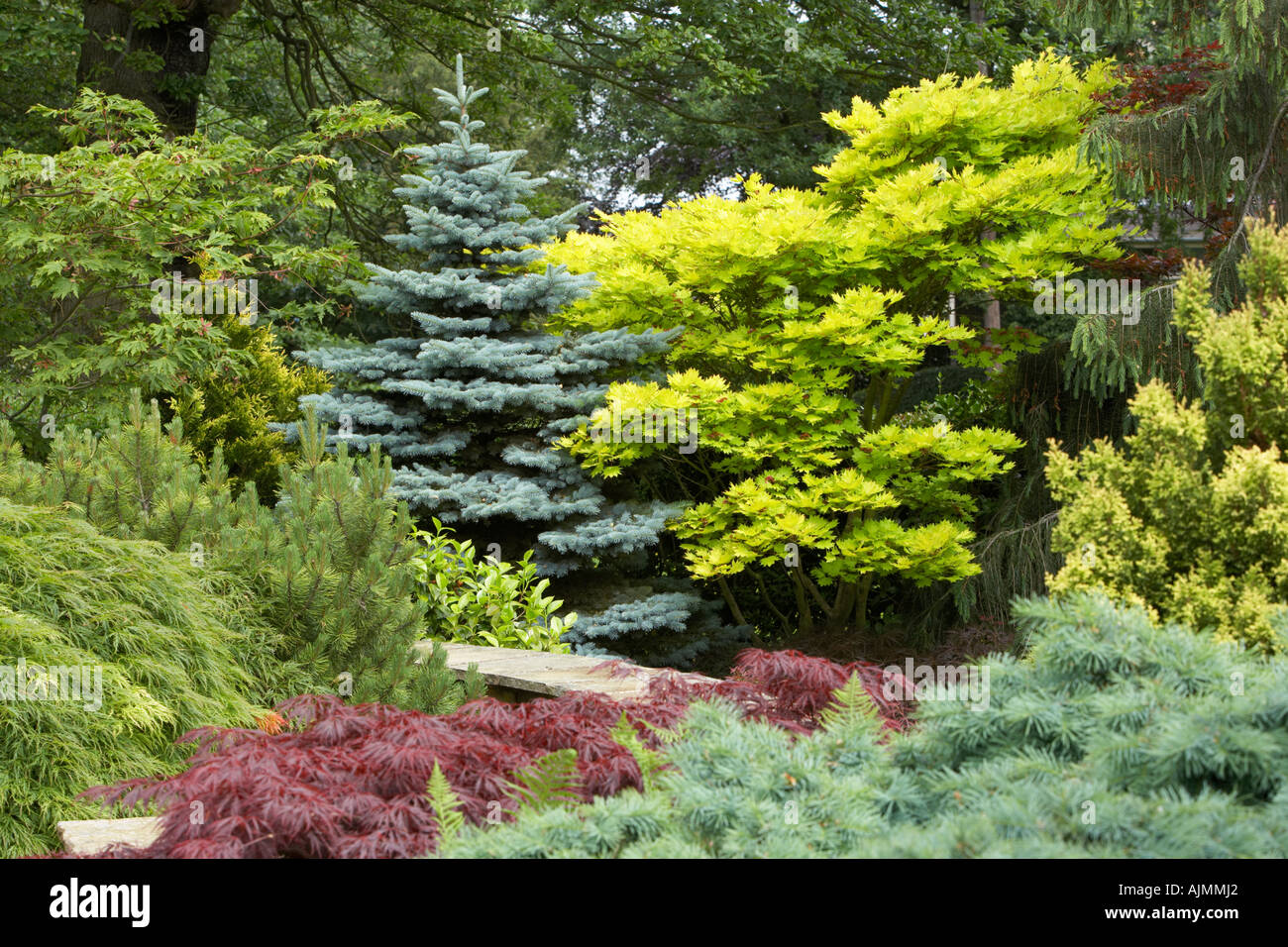 Conifers in the garden stock photo royalty free image for Garden trees scotland