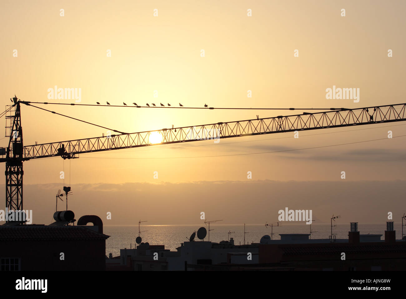 seagulls-in-silhouette-on-a-crane-in-pla