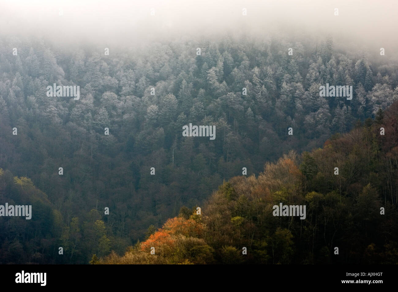 Mountain Slopes With Spring Foliage And Frosted Trees At Higher - Higher elevation