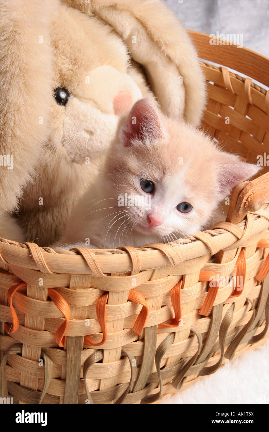 A baby kitten in a basket with a stuffed rabbit Stock