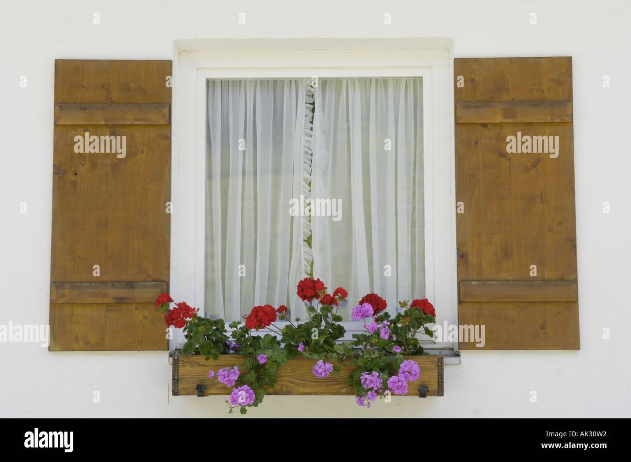window pane window box flowers blooms wood wooden shutters house ...