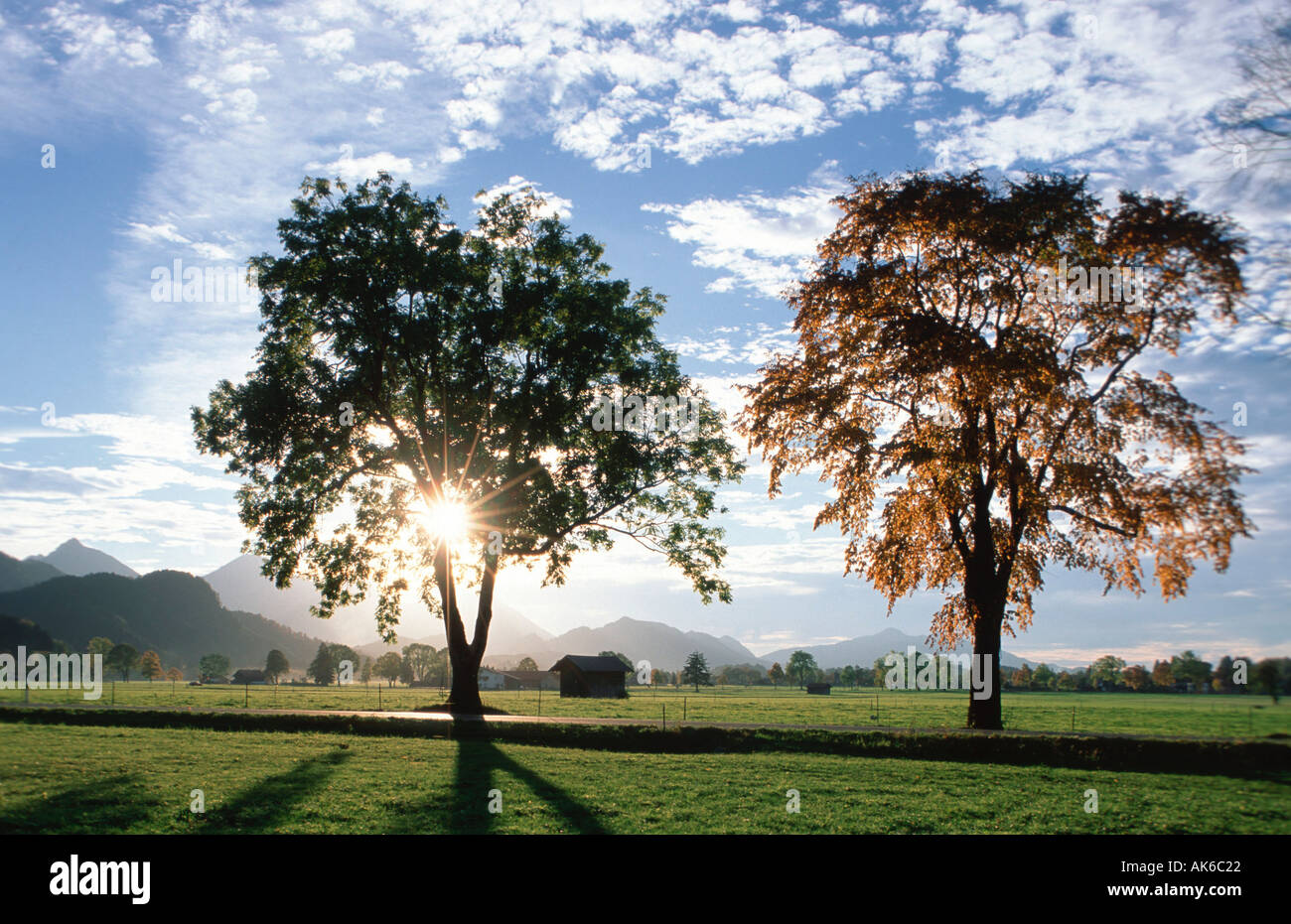 deciduous trees in backlight bavaria germany laubbaeume im gegenlicht stock photo royalty free. Black Bedroom Furniture Sets. Home Design Ideas