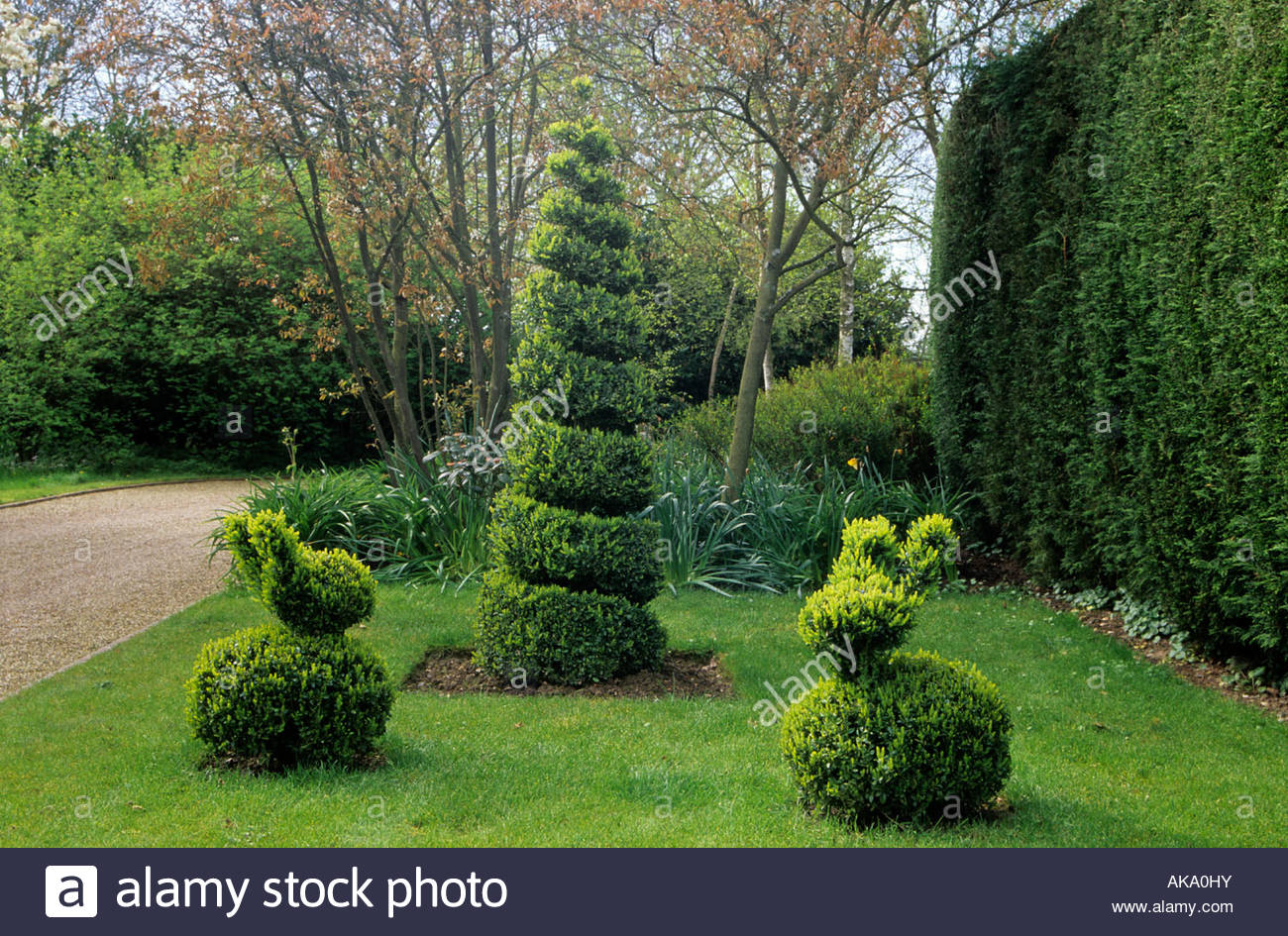 stock photo private garden kent boxwood topiary spiral and animals