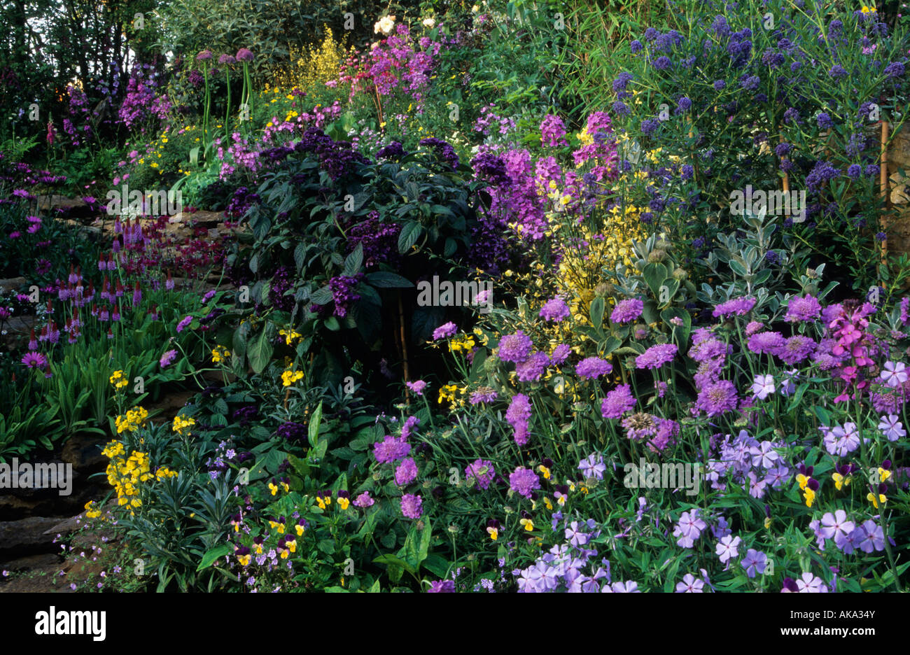 stock photo butterfly garden design marnie hall scabious heliotrope phlox
