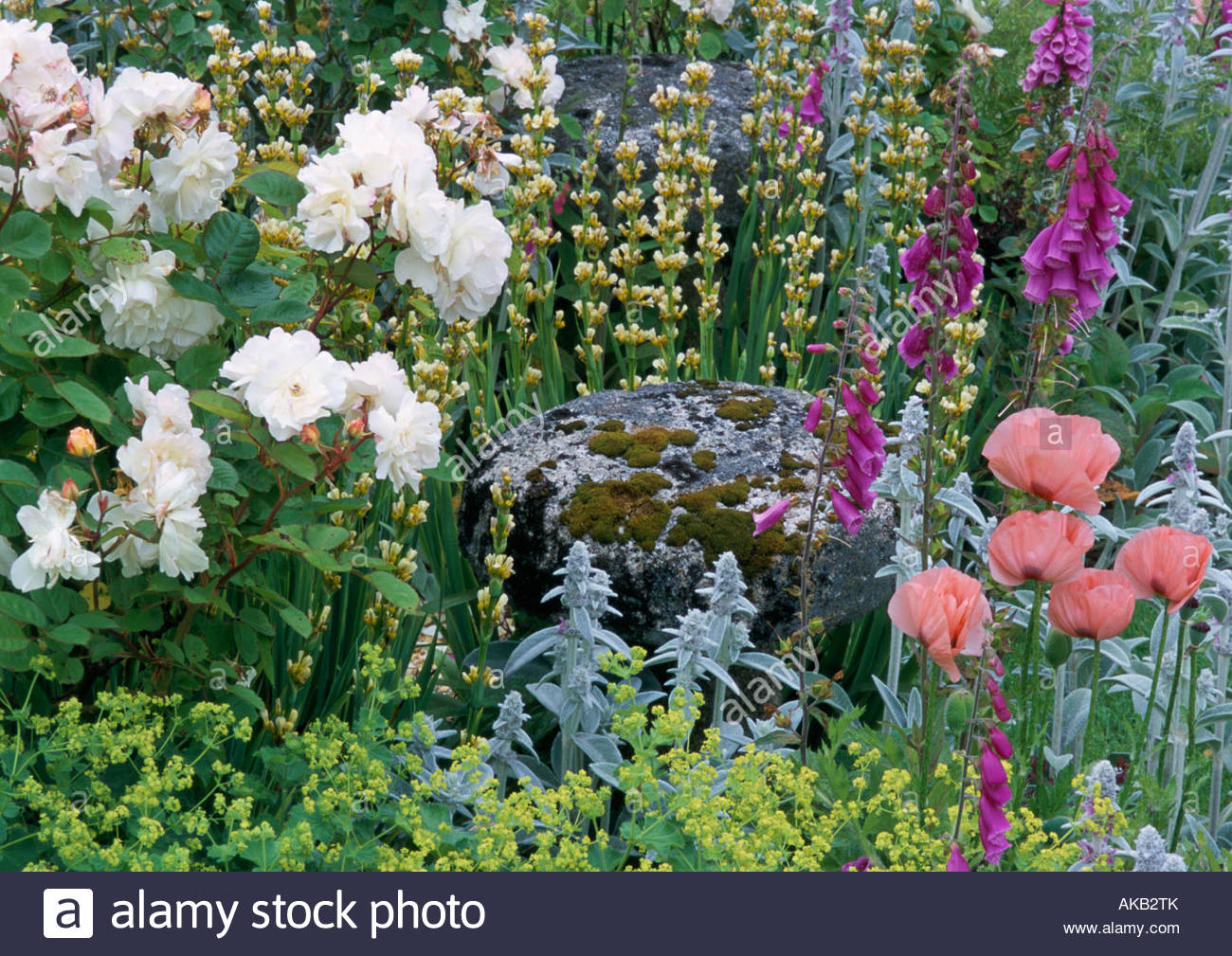 Country cottage gardens - Stock Photo Sussex Country Cottage Garden In Summer Mixed Border With Roses Rosa Penelope Poppies Sysirinchium Striatum