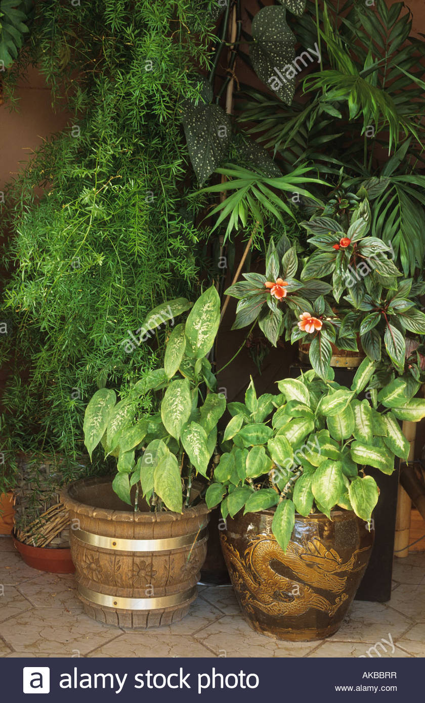 Collection Display Of Indoor House Plants In Pots