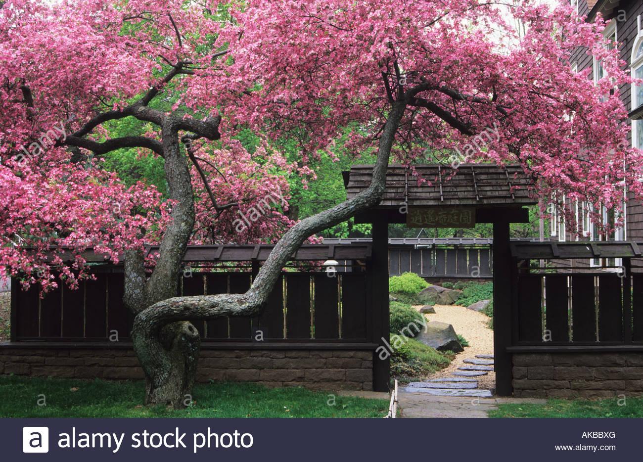 Shoyen teien middletown ct japanese garden design stephen for Free japanese garden designs